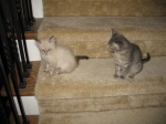 Little ones on the stairs